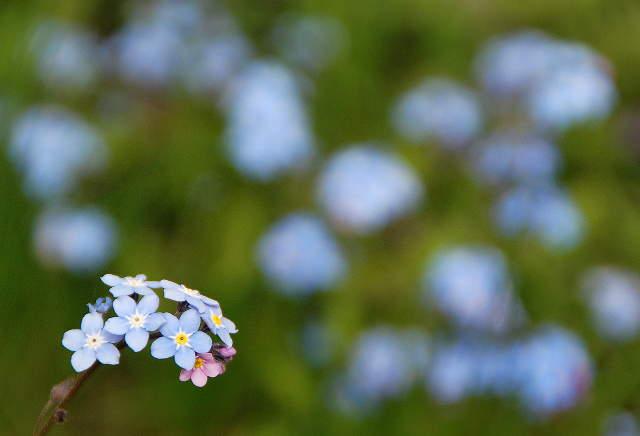 Незабудка - Как Запомнить - Чтобы Вспомнить
